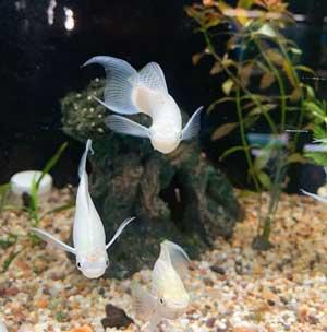 Anchor Bay Aquarium